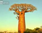 世界の大木スライドショー
