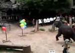 象のダーツ