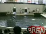イルカショー ハプニング映像