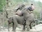 象の背中に乗って・・・