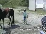 馬の後に立つのは危険