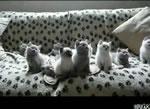 可愛いネコちゃん