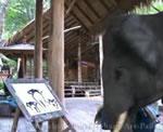 絵を描く象さん