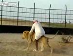 ライオンとじゃれ合う男