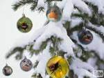動物達のクリスマス