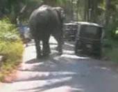 象が暴れ出したら誰も止められない!