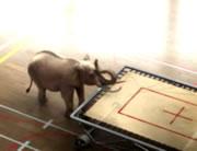 トランポリンで遊ぶ象