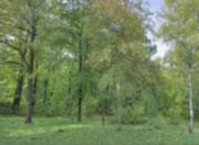 林の1年を40秒で見てみましょう