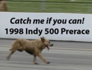 インディ500レース場に野良犬が迷い込む