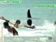 """世界のどっきりカメラ """"海岸にサメが出現"""""""
