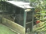 犬小屋から脱出するワンちゃん