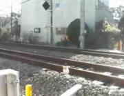 すぐ脇を電車が通ってもまったく平気な猫