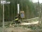 木皮を剥いて均等な長さに切断する