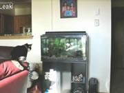 ネコと水槽