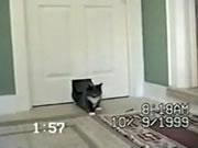ネコ専用の出入り口から入る予想外の訪問者