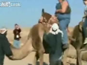 ラクダの悲鳴