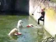 ベルリン 白クマの池に落ちた女性を救出