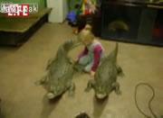 4歳の女の子と2頭のワニ