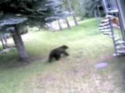 車のドアの開け方を覚えた熊