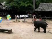 ダーツが得意な象
