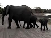 可愛い象の赤ちゃんのくしゃみ