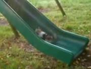 滑り台を上ろうとするネコ