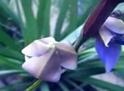 欄の花が咲くとき