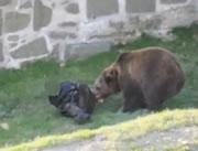 人を襲う熊