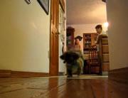 シッポに付けられた紐の先の鈴を追いかけ続ける犬