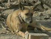 130人死亡した爆撃から生き残った犬を救出