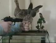 銃口を向けられて羽を挙げる鳥