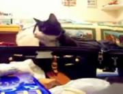 バッグが好きなネコちゃん