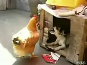 盛りの付いたワンちゃん、、ニワトリを小屋に連れ込む