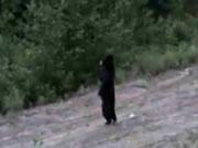 3本足の親熊 小熊を連れて後ろ足2本だけで歩く
