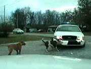パトカーを攻撃する犬