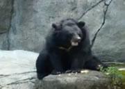 熊のマスターべー・・・
