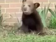 くしゃみが止まらないクマ