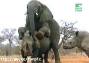 象とサイの交尾