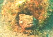 貝のを奪い合いをする魚