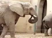 象さん・・そりゃ汚いよ;;