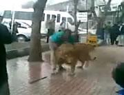 街中でライオンを洗う男性