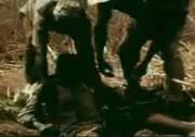 穴に片足を入れてアナコンダ捕獲