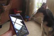 iPadとワンちゃん