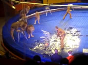 ライオンショー ハプニング