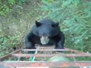 ちょっぴり気弱(?)なクマ