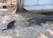 ワニ VS ネコ
