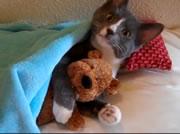 テディベアを抱きしめるネコ
