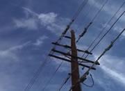 電柱から飛び降りるネコ