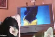テレビに夢中になるワンちゃん