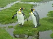 水が苦手(?)なペンギン